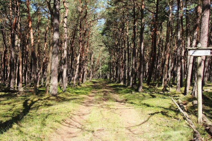 Unterwegs auf Rad- und Waldwegen
