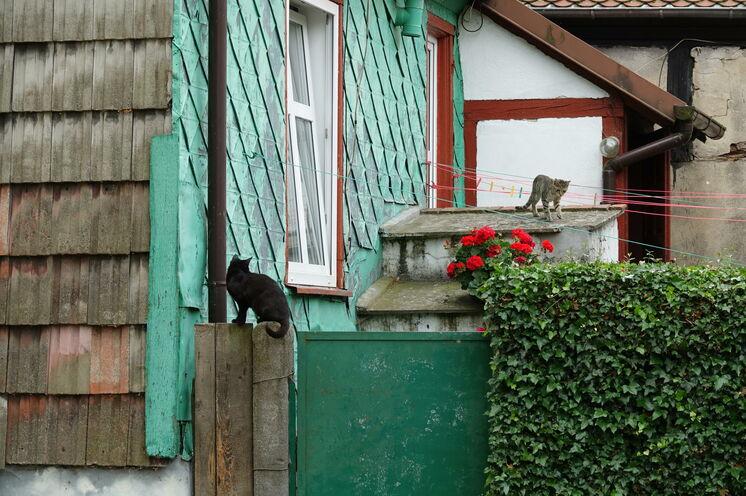 Weißer (in diesem Fall: grauer) Kater, schwarze Katze...