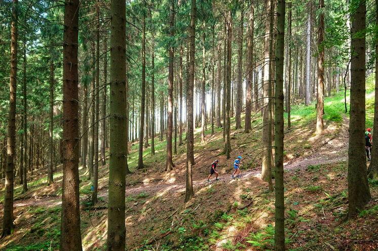 Die Trails führen durch urige Erzgebirgswälder, über Felder und durch traditionelle Orte.
