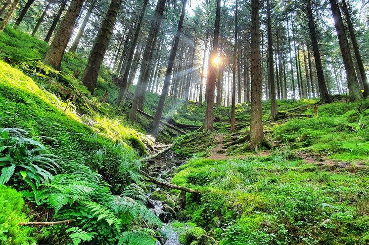 Das Auge läuft mit! Im Thüringer Wald erwartet Sie die Farbe grün in allen Facetten
