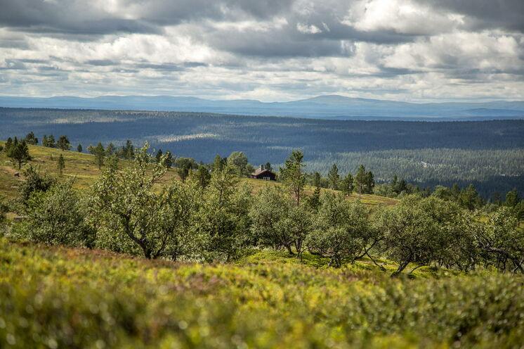 Hochland, Birkenwald und Kiefernurwald wechseln sich ab und machen die Trekkingtour sehr vielfältig