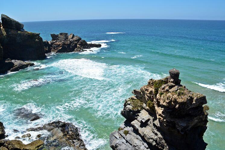 Besonders: Nur hier an der Küste leben die weltweit einzigartigen Klippenstörche