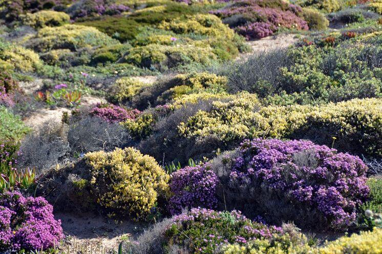 Die Dünen erstrahlen besonders im Frühjahr in farbenfroher Pracht