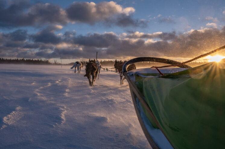 Spüren Sie die Kraft und Energie der Alaskan Huskies
