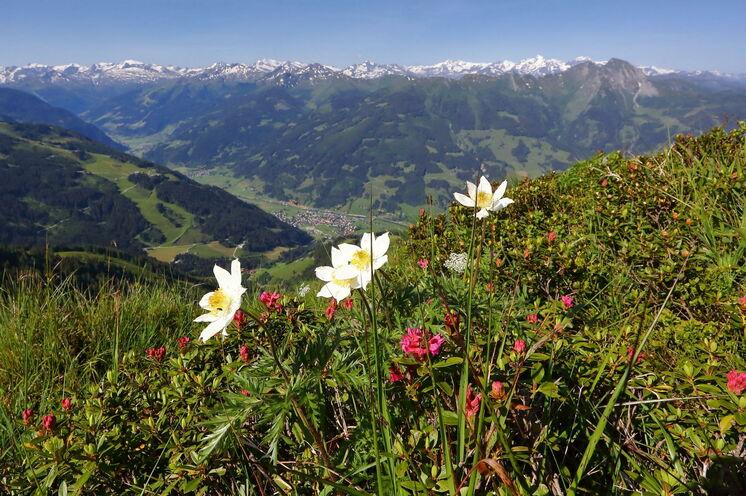 Die Aussicht ist einfach grandios – in der Ferne sehen Sie bis hin zu den schneebedeckten Gipfeln