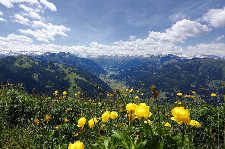 Bei Ihren Wanderungen können Sie immer wieder die wunderbare Blumenpracht der Bergwiesen bewundern – zu jeder Zeit blüht etwas anderes