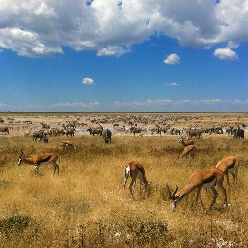 Namibias Höhepunkte aktiv & hautnah