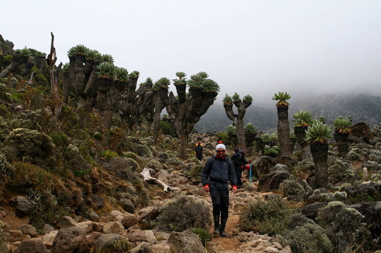 Die skurrile Landschaft kurz vor dem Barafu Camp (4650m) auf der Lemosho-Route könnte einem Science-Fiction-Film entsprungen sein