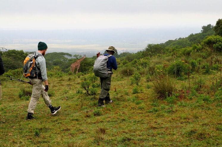 Nach dem Abstieg des Mt. Merus lassen sich schon die ersten Tiere beobachten