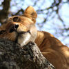 Reisebaustein: Individuelle Safari im Norden Tansanias
