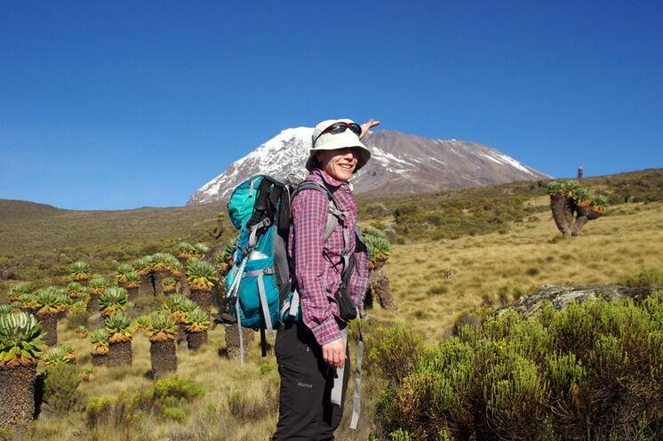 Dem Ziel so nahe. Blick auf den Kibo vom Garten der Senezien auf der Marangu-Route