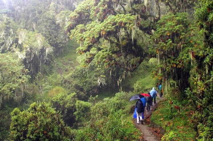 Am Mount Meru kann es auch mal regnen - wetterfeste Bekleidung im tropischen Bergregenwald oder ein Trekkingschirm dienen als Schutz
