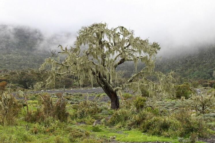 Mystische Landschaft in der Nähe der Miriakamba Hut prägen das Erlebnis Mount Meru
