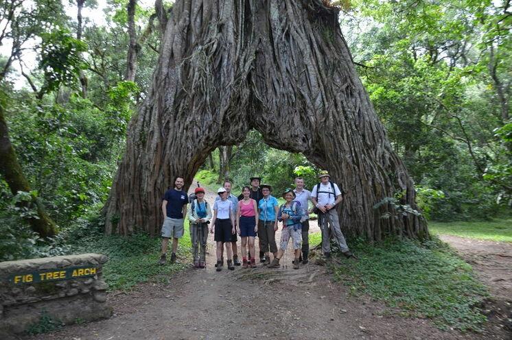 Der Aufstiegspfad (zugleich auch Versorgungspiste) verläuft mitten durch einen uralten Baum.