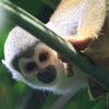 Naturparadiese Anden und Amazonas