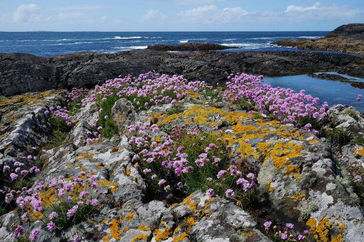Am meisten Spaß macht das Wandern im County Galway während der Blütezeit von Mai bis August