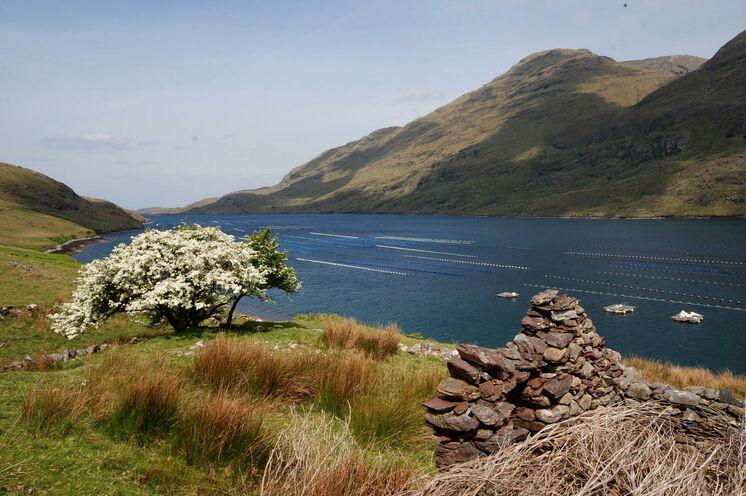 Der Killary Harbour ist der einzige Fjord Irlands und führt tief in die Berge