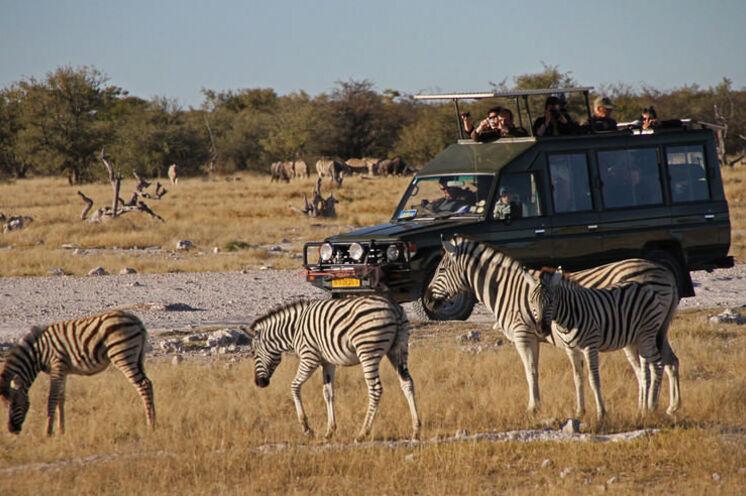 Auf Pirschfahrt im Etosha-Nationalpark (15.-17.Tag)