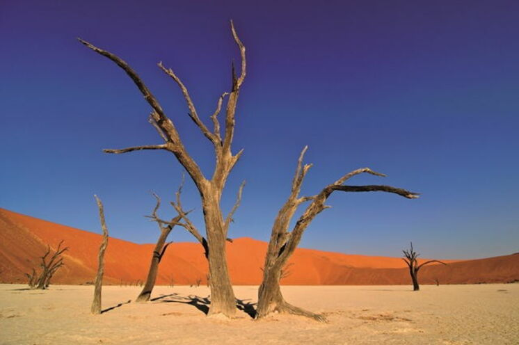 Aktiver Urlaub in Namibia - Auf Wanderungen erkunden Sie die faszinierende Natur des südlichen Afrikas. Hier: Beeindruckende Farbkontraste im Sossusvlei