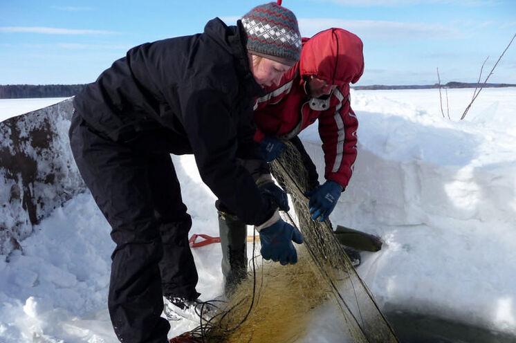 Interessant ist auch das Netzfischen. Das Fangergebnis wird gleich danach in eine leckere Mahlzeit verwandelt.