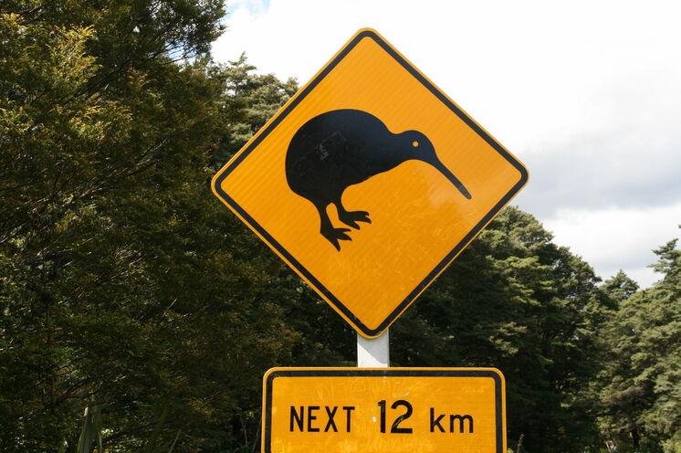 Augen auf - mit viel Glück werden Sie Neuseelands Nationalvogel in freier Wildbahn antreffen