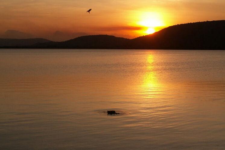 Abendstimmung am Albertsee mit Flusspferd und Kolibri.