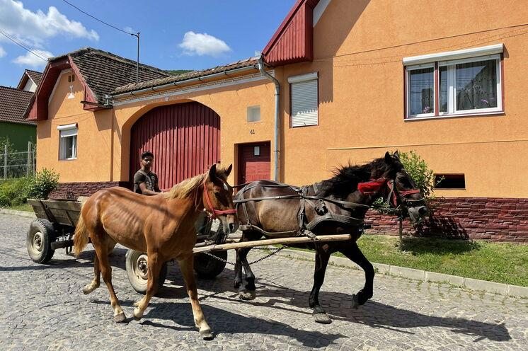 Pferdegespanne sind selten geworden, aber es gibt sie noch