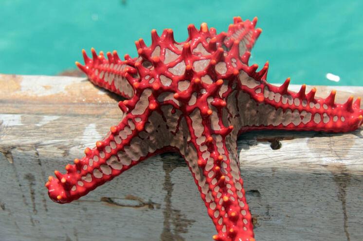 Meeresbewohner oder gar Meeresungeheuer?