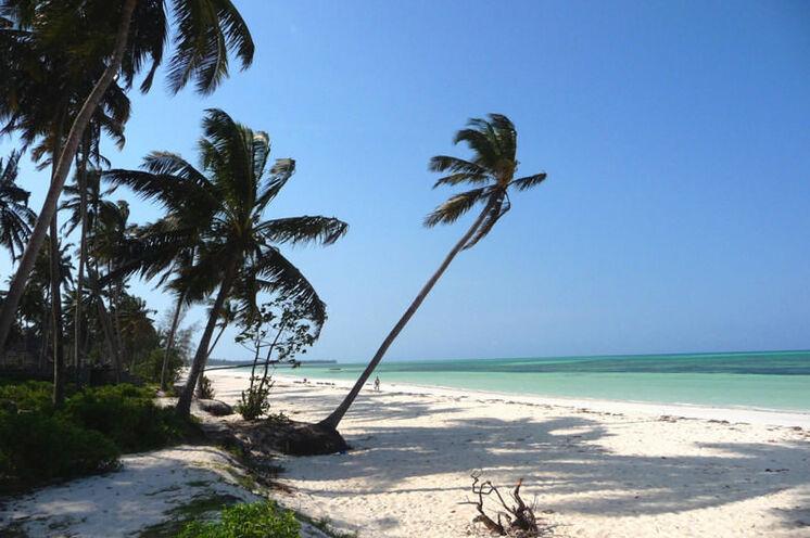 Idyllische Szenerie an Sansibars Ostküste: Lange Strände laden zum Relaxen ein. Die Strände an der Ostküste sind noch weitestgehend vom großen Tourismus verschont.