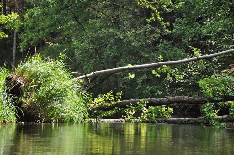 Mit Bäumen, die quer über den Fluss liegen, muss sich der Paddler arrangieren!