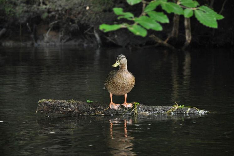 Der Fluss ist natürlich Heimat für viele Tiere, die am oder im Wasser leben